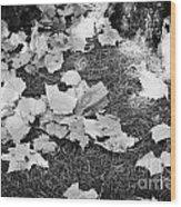 Fallen Acer Maple Leaves On Ground Autumn Fall Celebration Florida Usa Wood Print