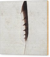 Fallen And Found - Hawk Feather Wood Print