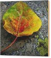 Fallen Autumn Aspen Leaf Wood Print