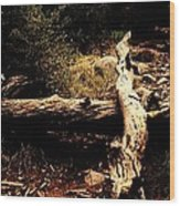 Fallen Beauty Wood Print