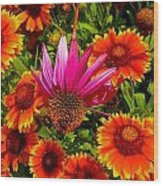Fallen Coneflower Wood Print