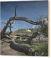 Fallen Dead Torrey Pine Trunk At Torrey Pines State Natural Reserve Wood Print