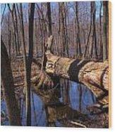 Fallen In Silence Wood Print