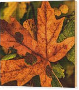 Fallen Maple Leave Wood Print