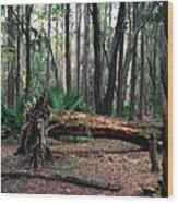 Fallen Oak. Split Oak Forest. Wood Print
