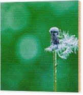 Fallen Off Dandelion - Featured 3 Wood Print