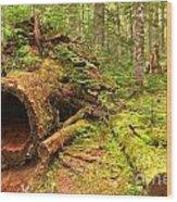 Fallen Rainforest Giant Wood Print
