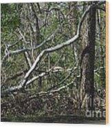 Fallen Sycamore Wood Print