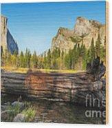 Fallen Tree In Yosemite Wood Print