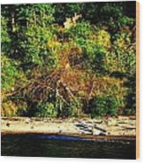 Fallen Tree On The Shore Wood Print