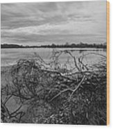 Fallen Trees At The Lake Wood Print