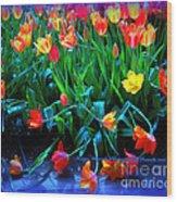 Fallen Tulips Wood Print