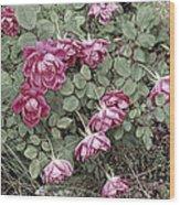 Fallin' Roses Wood Print