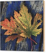 Falling For Colour Wood Print