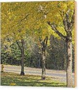 Falling Leaves From Neighborhood Beech Trees Wood Print