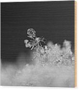 Falling Snowman Wood Print