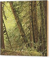 Falling Trees In The Rainforest Wood Print