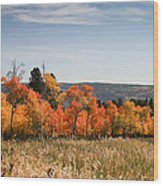 Fall's Splendor - Casper Mountain - Casper Wyoming Wood Print