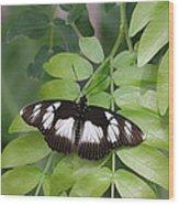False Diadem Butterfly Wood Print
