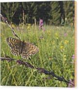 False Heath Fritillary In Meadow Bavaria Wood Print
