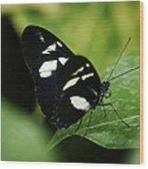 False Zebra Longwing Butterfly Wood Print