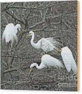 Family Affair Egrets Louisiana Wood Print