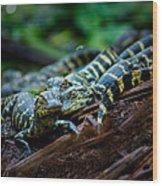 Baby Alligator Selfie Wood Print
