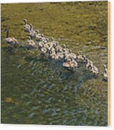 Family Of Geese On The Rogue River Wood Print