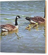 Family Of Geese Out For A Swim Wood Print