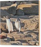 Family Of Nz Yellow-eyed Penguin Or Hoiho On Shore Wood Print