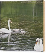 Family Of Swans Wood Print
