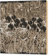 Family Portrait Before The Hunt-featured Picture In Large Dogs Only Group Wood Print
