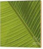 Fan Of Green 2 Wood Print
