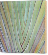 Fan Palm Abstract 2 Wood Print
