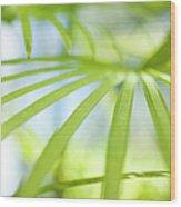 Fan Palm Fronds Wood Print