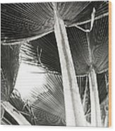 Fan Palm Wood Print by Lisa Cortez