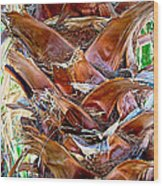 Fan Palm Trunk In Andreas Canyon In Indian Canyons-ca Wood Print