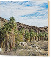 Fan Palms Line The Creek In Andreas Canyon In Indian Canyons-ca Wood Print