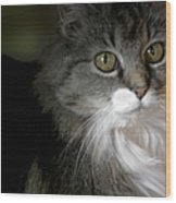 Fancy Cat Wood Print