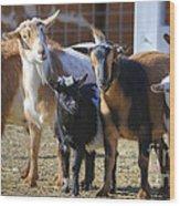 Fancy Goats Wood Print