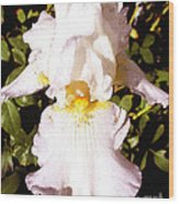 Fancy Lady White Iris Wood Print