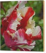 Fancy Spring Wood Print