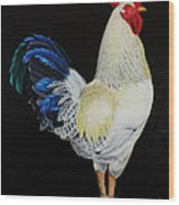 Fancy Tail  Rooster Wood Print