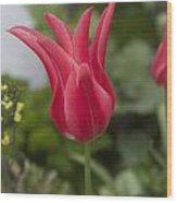 Spiky Tulip Wood Print