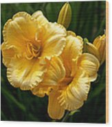 Fancy Yellow Daylilies Wood Print