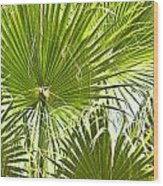 Tropical Fans Wood Print