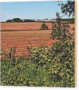 Farm Along Confederation Trail-pei Wood Print