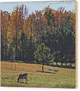 Farm Journal - Grazing Wood Print