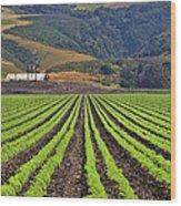 Farm Lands Of The Central Coast By Diana Sainz Wood Print