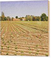 Farm Landscape Wood Print